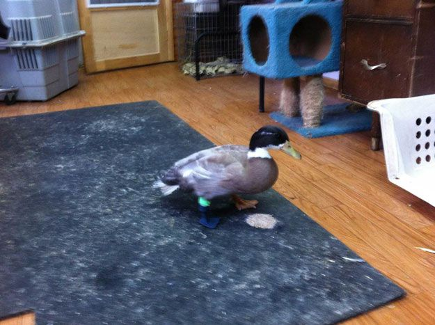 dudley duck with 3d printed leg