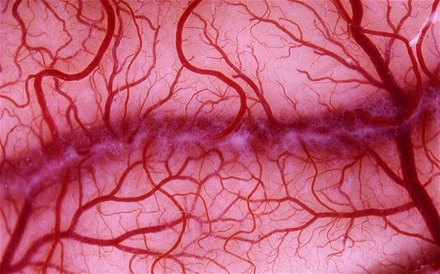The Creation of the World's First-Ever 3D Blood Vessel Bio-Printer