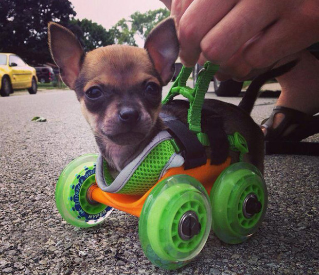 Pets With Injuries or Birth Defects Will Get a Chance for a Happy Life