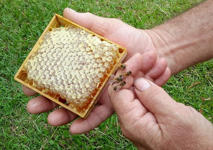 3D Printing Honeycombs to Help Bees