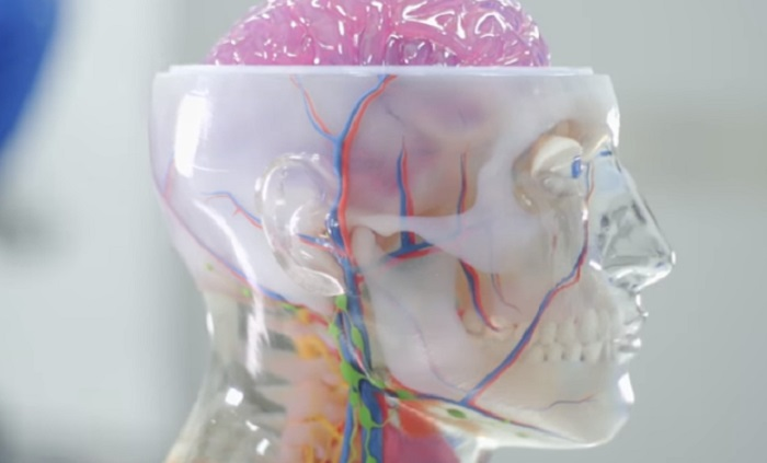 Realistic 3D Printed Simulators for Neurosurgery