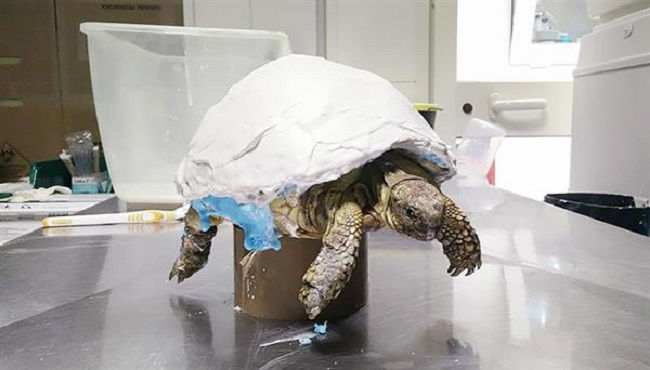 3D Printed Prosthetic for Uga the Turtle